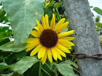 www.chemanokokoro.blogspot.com