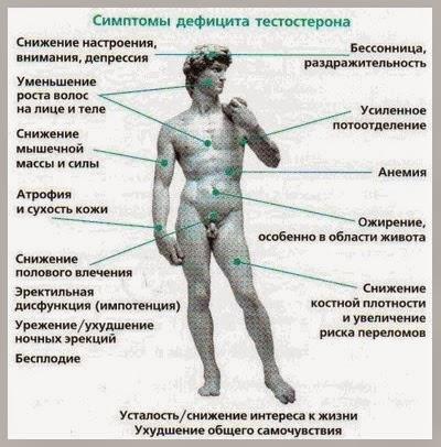 собственного тестостерона выработку Запустит