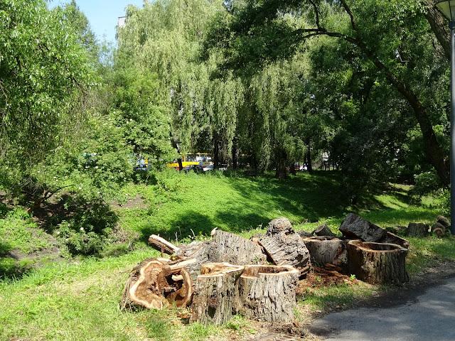 Wycinka drzew na Skwerze Harcerskim