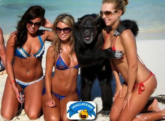 majmuni kap cicen