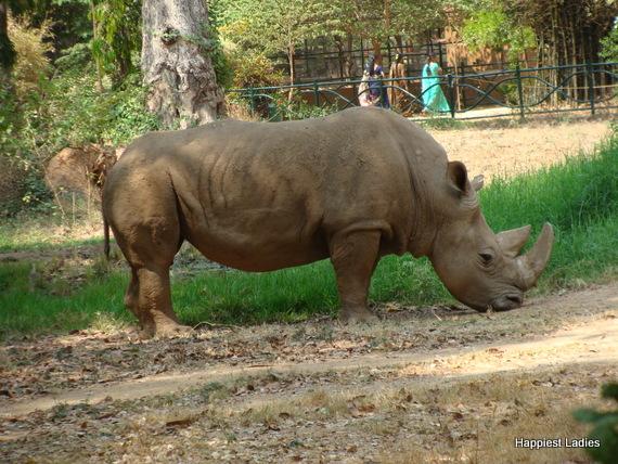 rhino mysore zoo