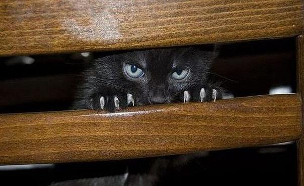 Кот против Марины Салье и её дутой сенсации