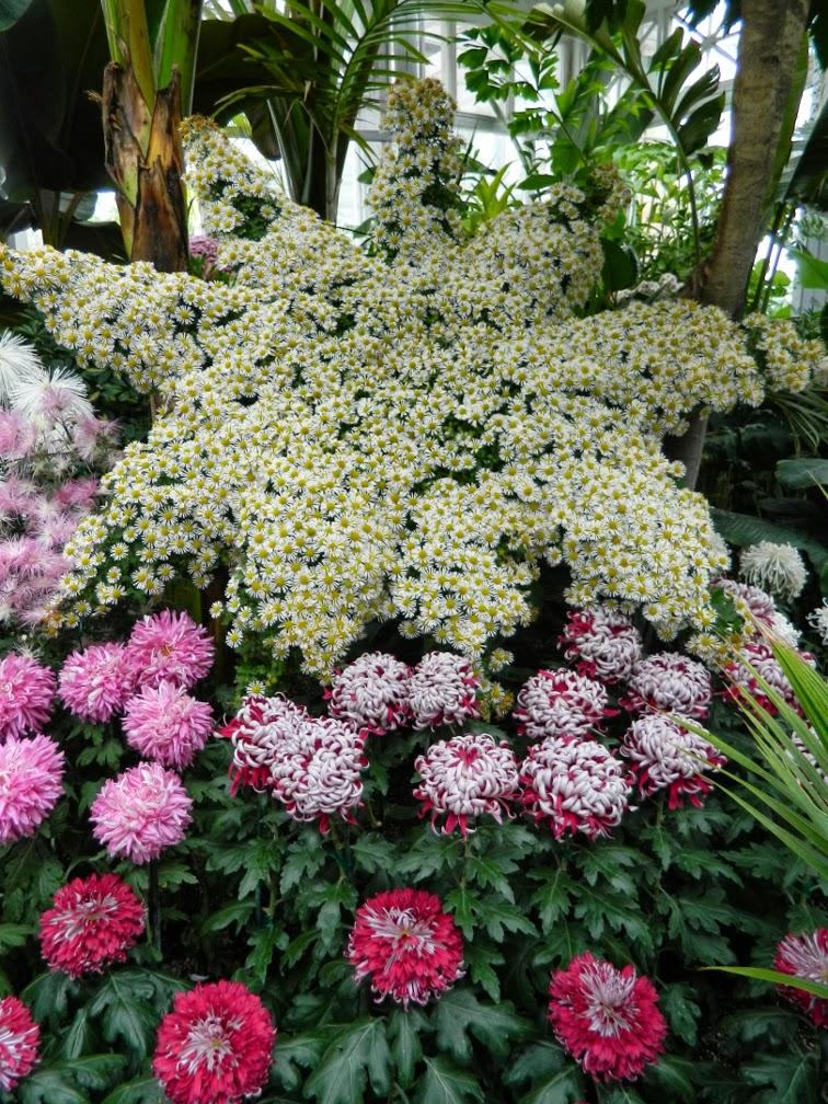 Allan Gardens Conservatory Chrysanthemum Show 2013 fall mums by garden muses-a Toronto gardening blog
