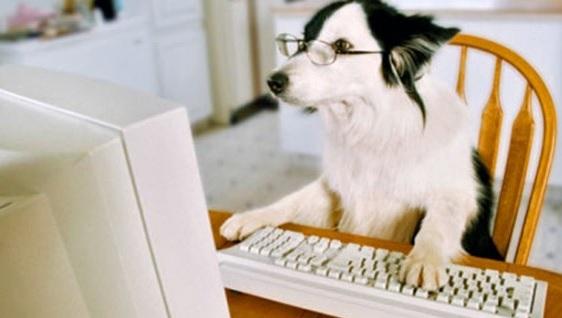 Perro en computadora
