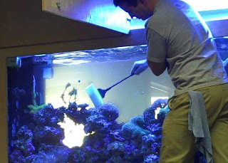 how to start an aquarium business at home