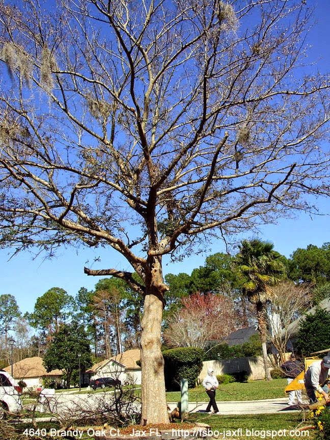 4640 brandy oak ct drake chinese elm tree removal