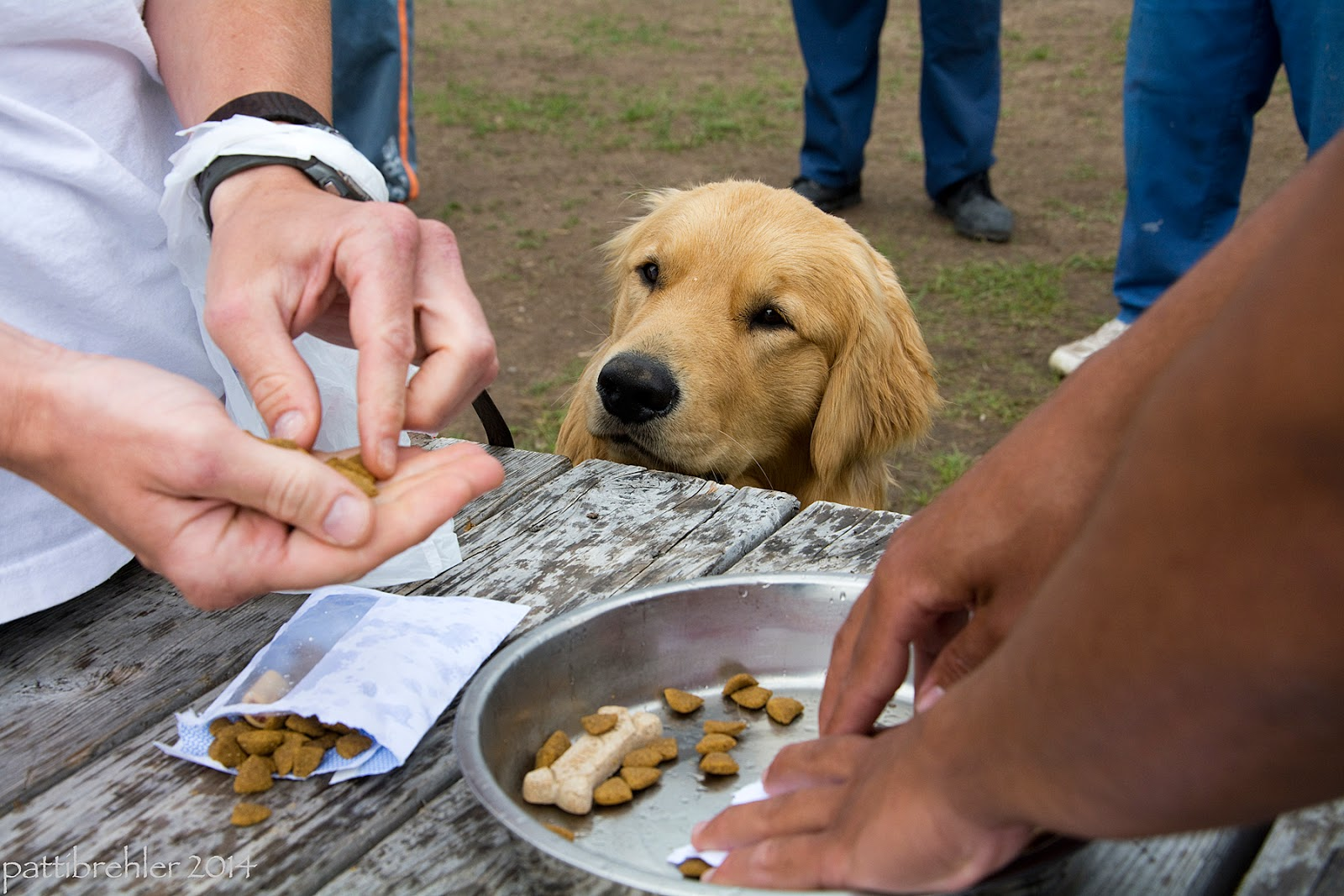 "A golden retriever is sitting next to a wood picnic table, peering at his handler's hands. The handler, on the left, has a handful of kibble in his right hand and is taking bits out with his left hand. The puppy's leash is around the man's left wrist, as well as the handle of a plastic shopping bag. On the table is a ripped open envelop with kibble spilling out and a silver dog bowl filles with bits of kibble and a milkbone. The ""cashier's"" arms are hlding the bowl from the right side. In the background are the legs of two men dressd in the prison blue uniforms."