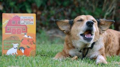 pumpkin flavored dog treats
