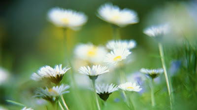 Download free beautiful flower wallpapers hd widescreen high quality desktop