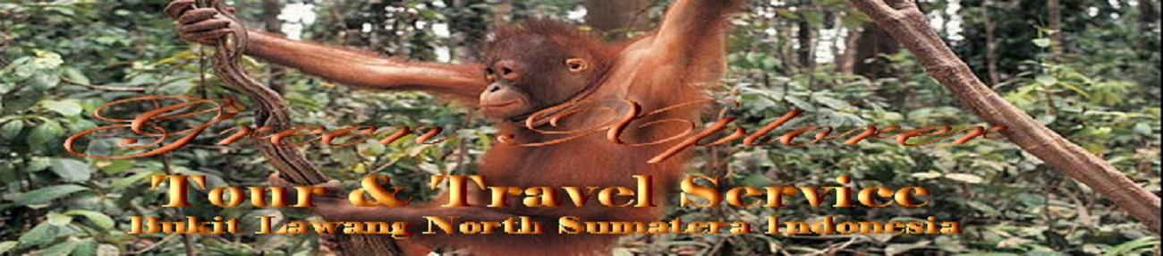 ECO - BUSINESS BUKIT LAWANG - Bukit Lawang Tourist Exhebition ( Orang - Utan )