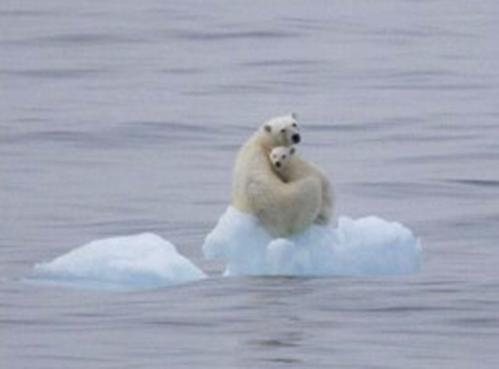 Ursos Polares