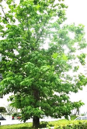 Árvores e seus benefícios