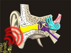 Causes Of Buzzing In The Ears