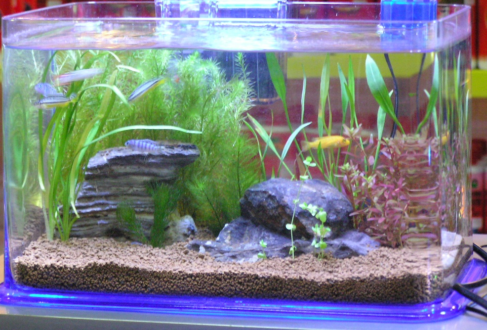 my fresh water aquarium natural planted tank walstad. Black Bedroom Furniture Sets. Home Design Ideas