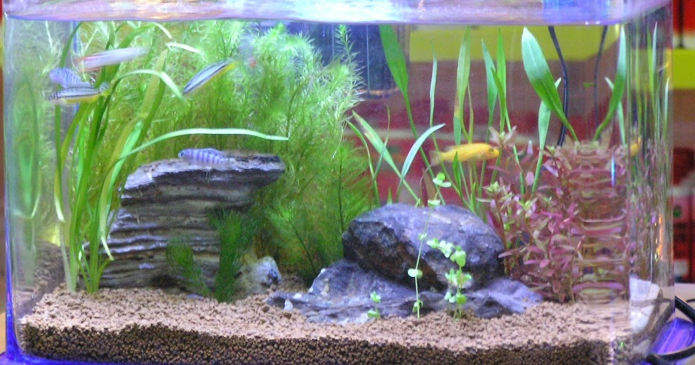 ... Aquarium - Natural Planted Tank (Walstad Method).: Nano Aquariums