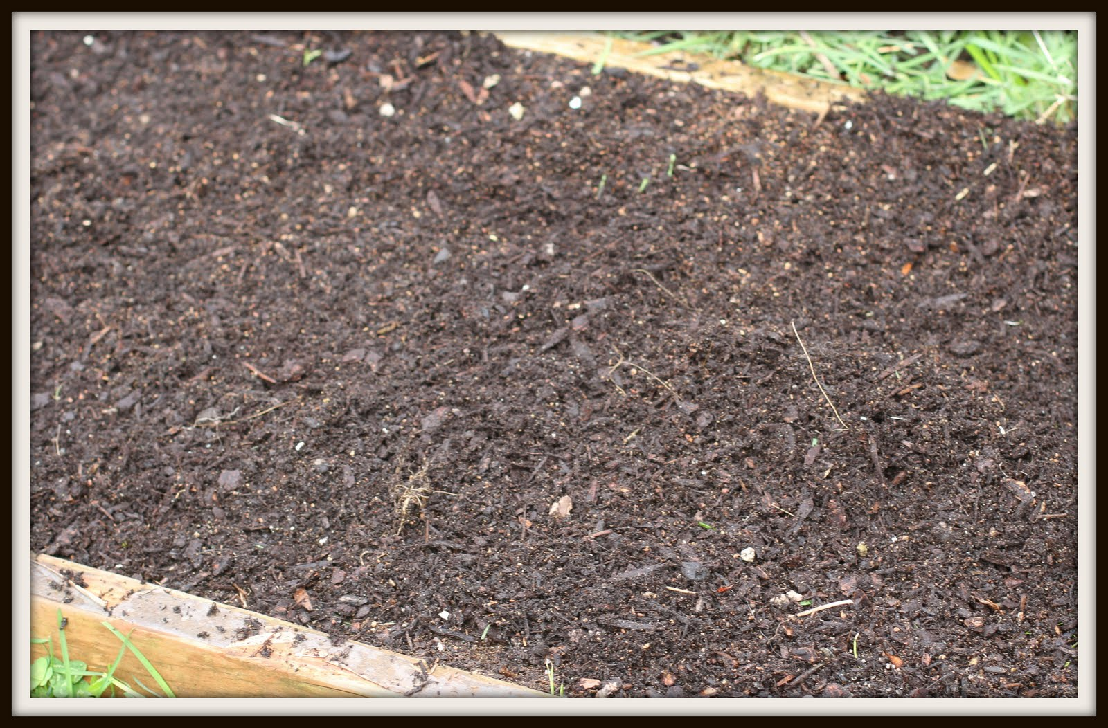 Buying Soil For Raised Beds