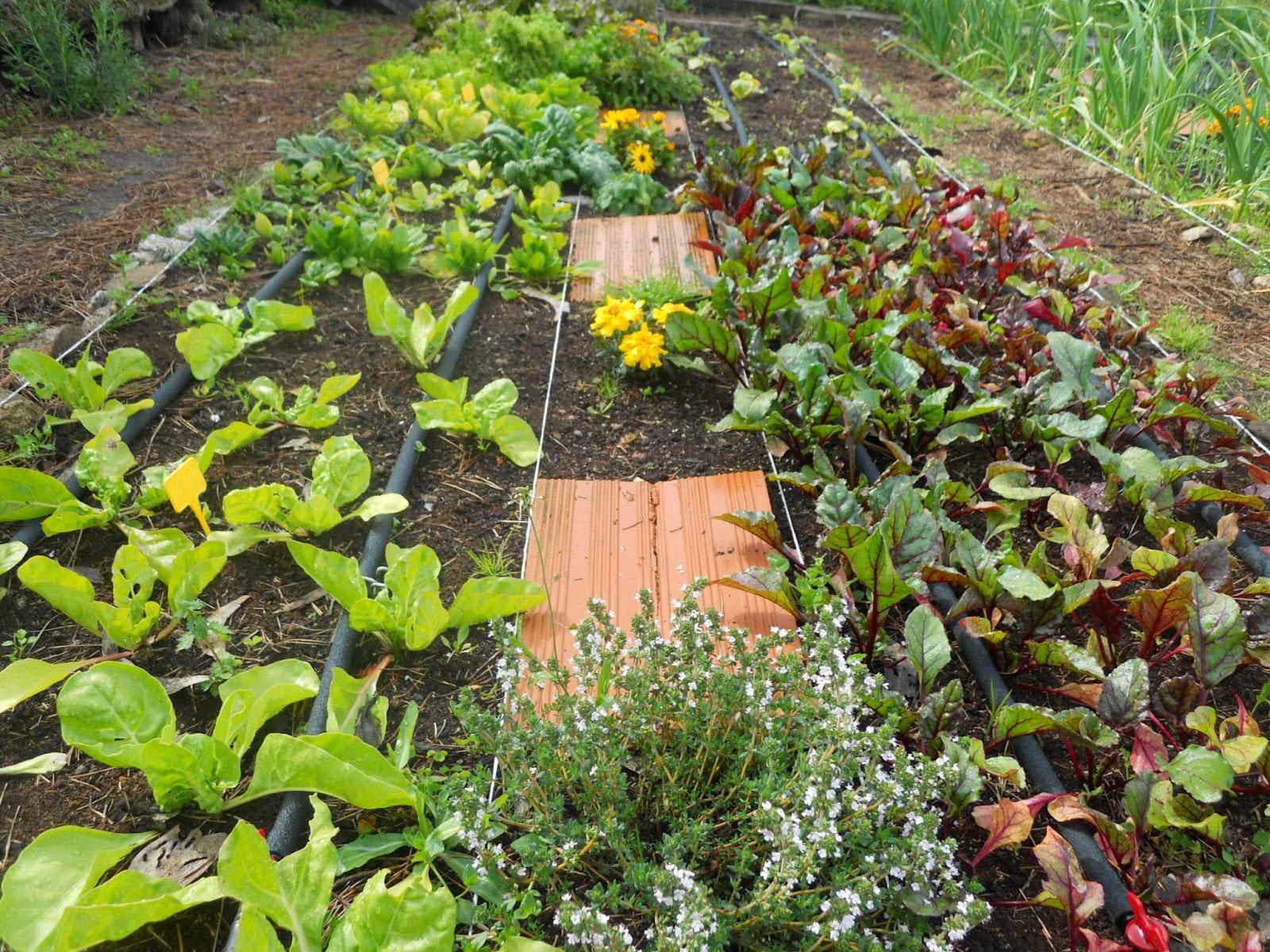Permacultura autosuficiencia y tecnolog a distintos - Como hacer un jardin bonito ...