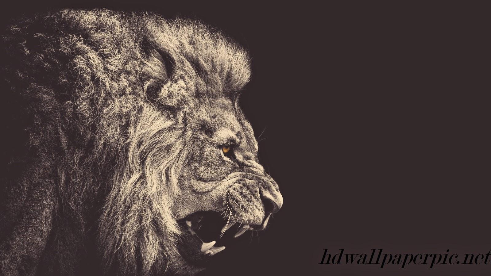 Beautiful Roar Wallpaper