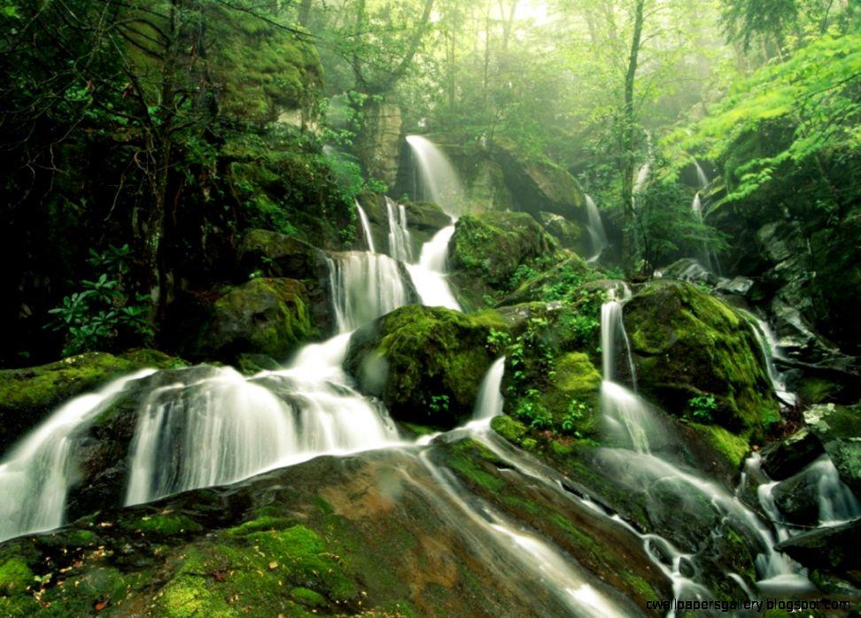 Tropical Rainforest Biome   ThingLink