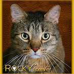 Run Free Sweet Rocky