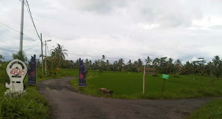 Junjungan Rice Field