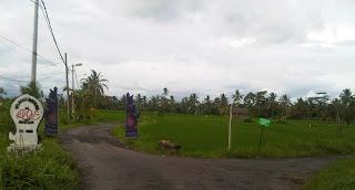 Junjungan Rice Field