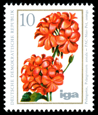 1975 Pelargonie, Pelargonium Zonale, PAC-Mini-Pel, Deutsche Demokratische Republik Briefmarke