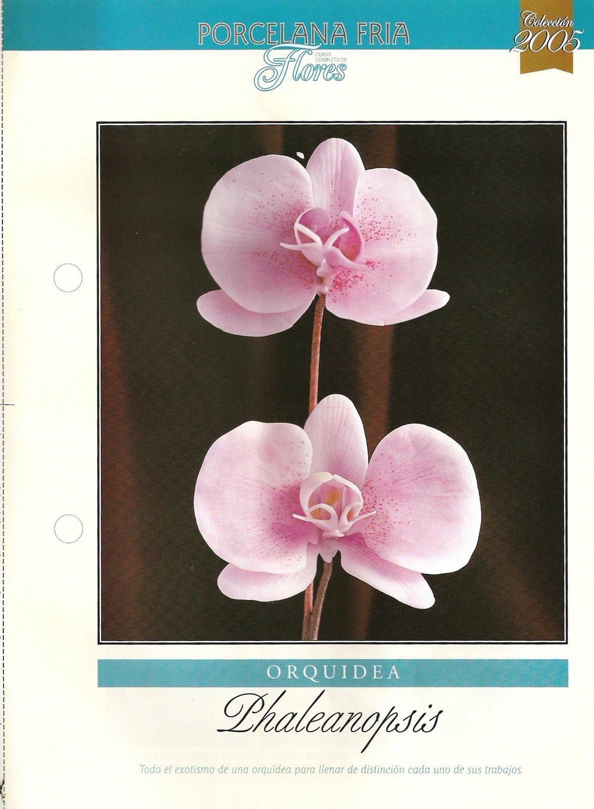 Paso a Paso orquidea Phaleanopsis 01