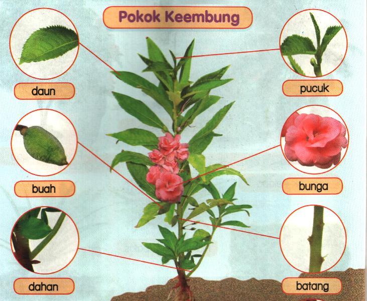 Sebutkannama tumbuhan berikut: