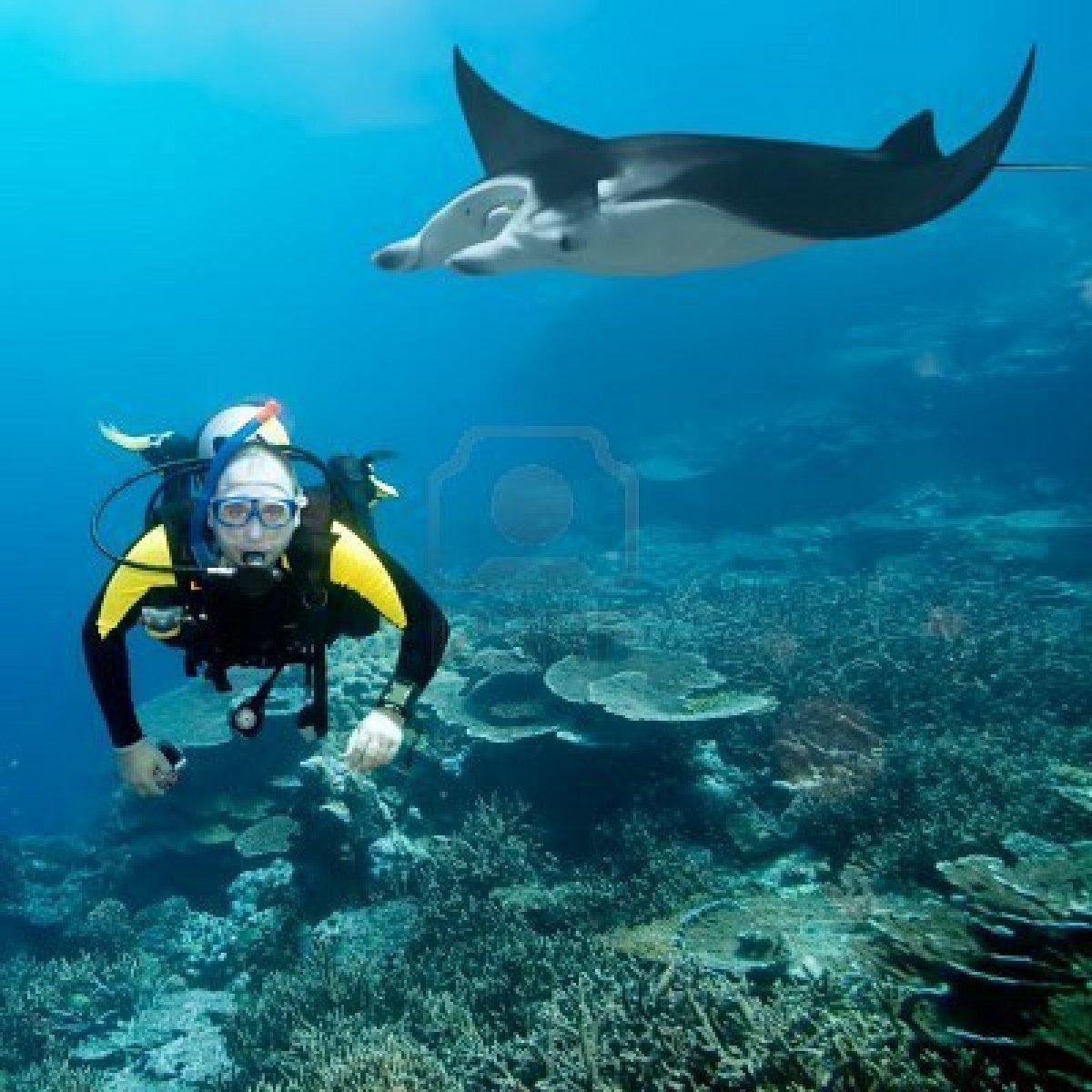 http://3.bp.blogspot.com/-98sI_1Ue_lw/TtzqFvHKkTI/AAAAAAAAA0s/rw0DBwgVn4M/s1600/coral-reef-background-1-794422.jpg