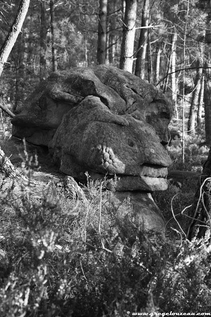 Drôle de crâne de saurien, Rer du Potala, Trois Pignons, (C) 2014 Greg Clouzeau
