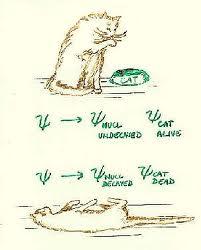 o gato de shrodinger...