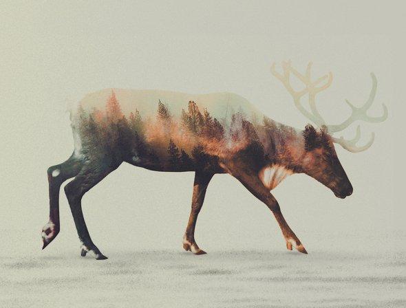 Andreas Lie fotografia dupla exposição animais e paisagens naturais photoshop