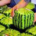 Γιατί στην Ιαπωνία τα καρπούζια είναι..τετράγωνα!