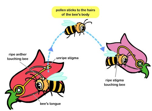 Pollination And It U0026 39 S Types