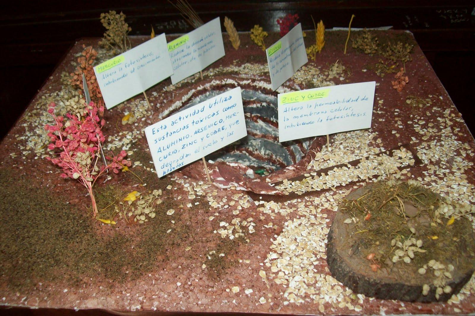 La maqueta esta hecha con varias plantitas para decorar, con avena, la