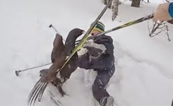 Mad Capercaillie Tjur attacks skiing kids in Norway