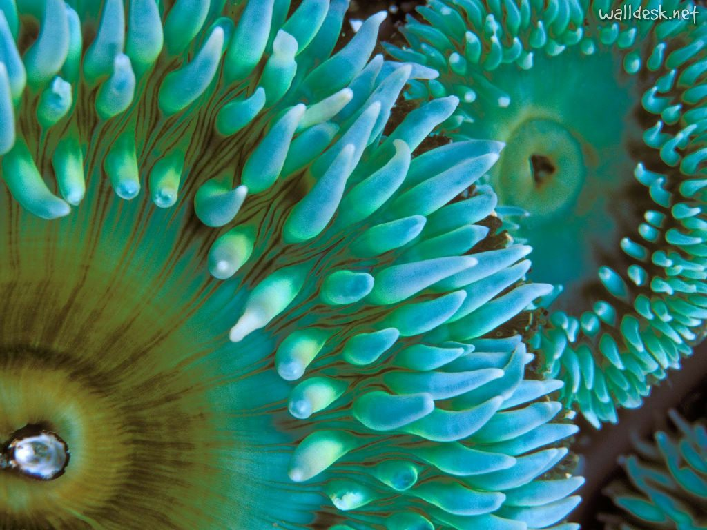 DEEP BLUE HOME: SEA ANEMONES ARE GROOVY