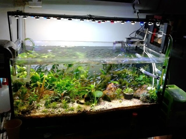 Lampu LED Aquascape