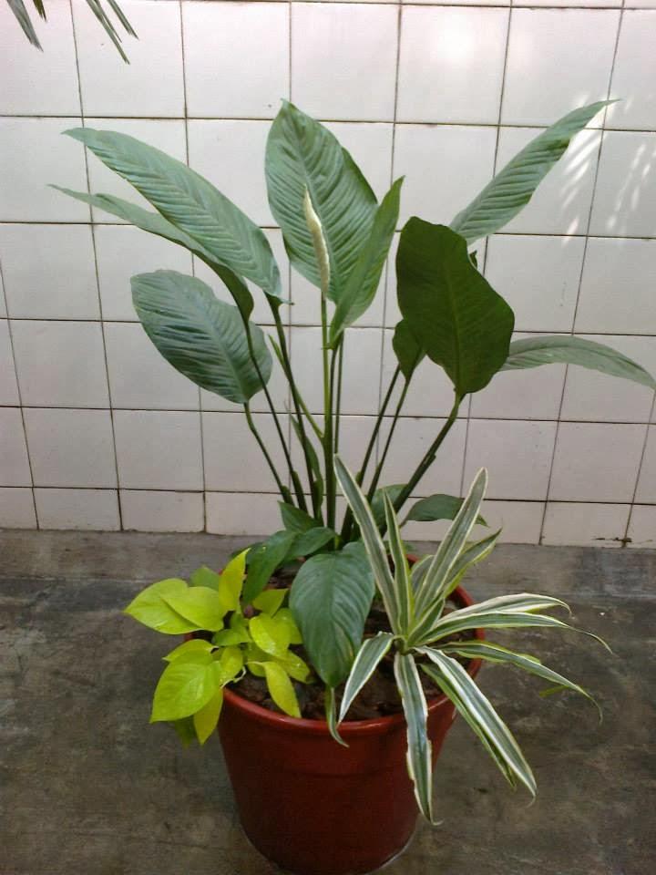 Jardines en macetas for Varias plantas en una maceta