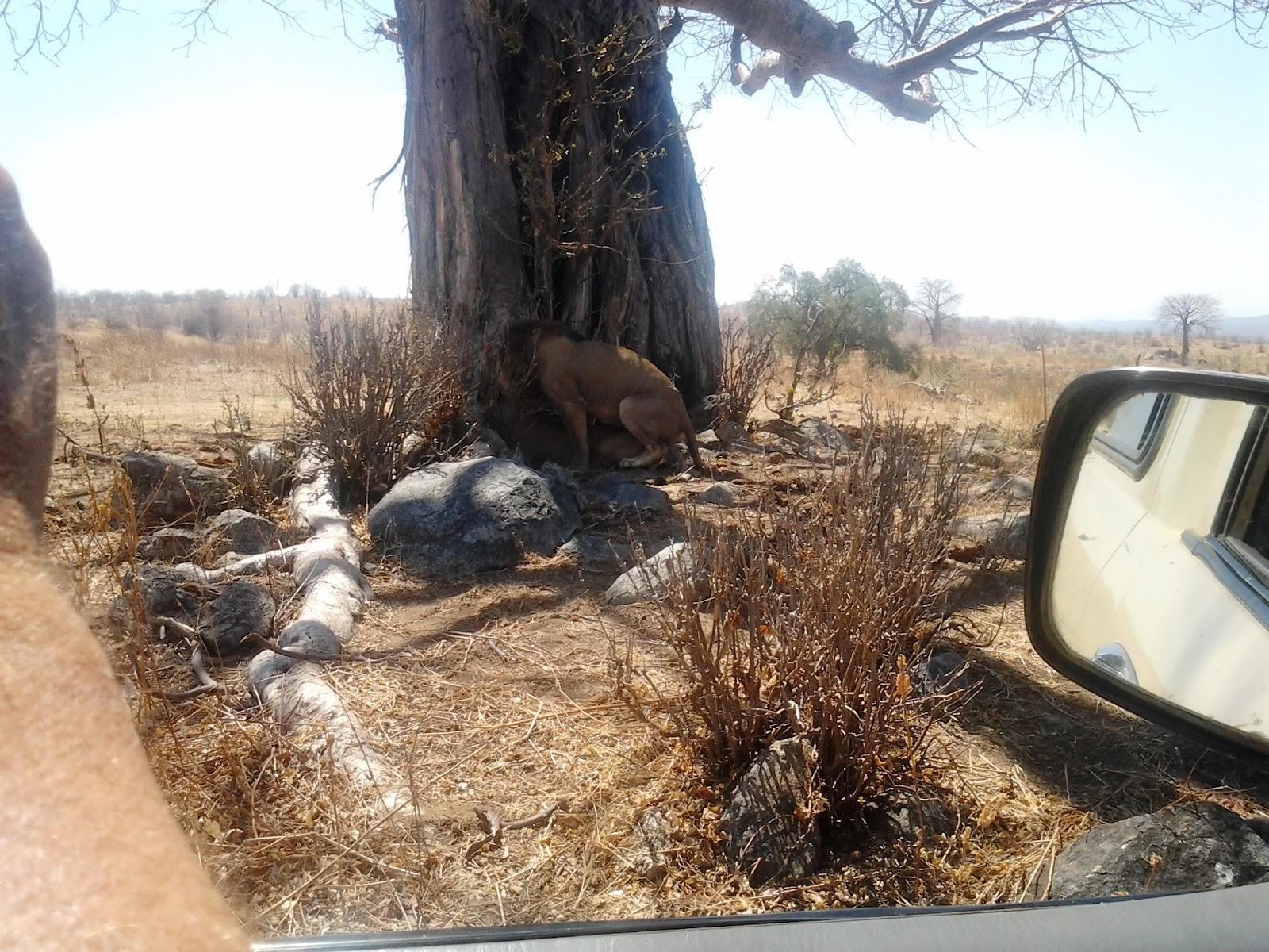 HSK Safaris