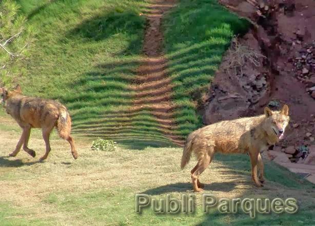 Lobos de Terra Natura