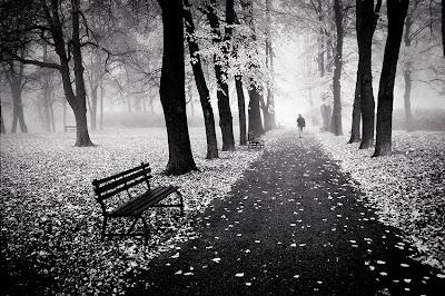 Gambar hitam putih musim gugur di sebuah taman.