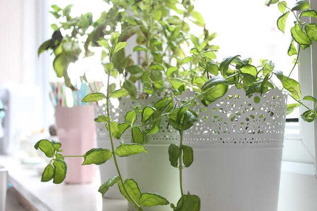 ikea skurar plant pots in kitchen with herbs