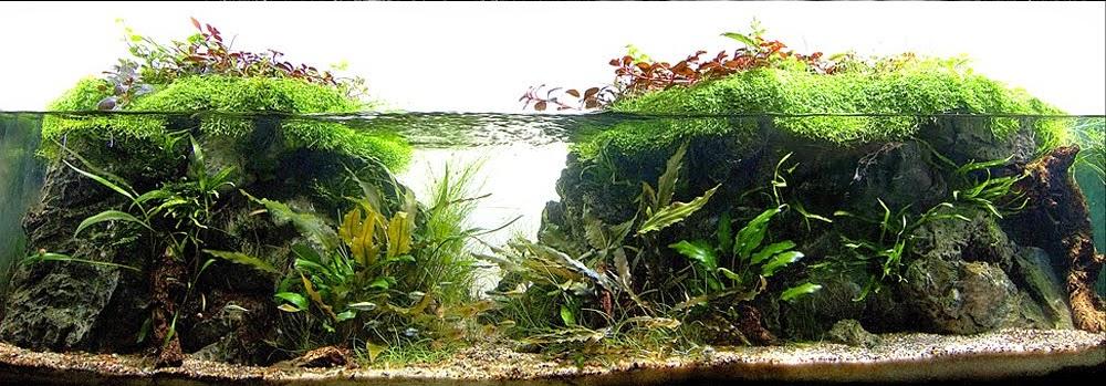 Aquascaping spain algo esta cambiando en espa a - Aquascape espana ...