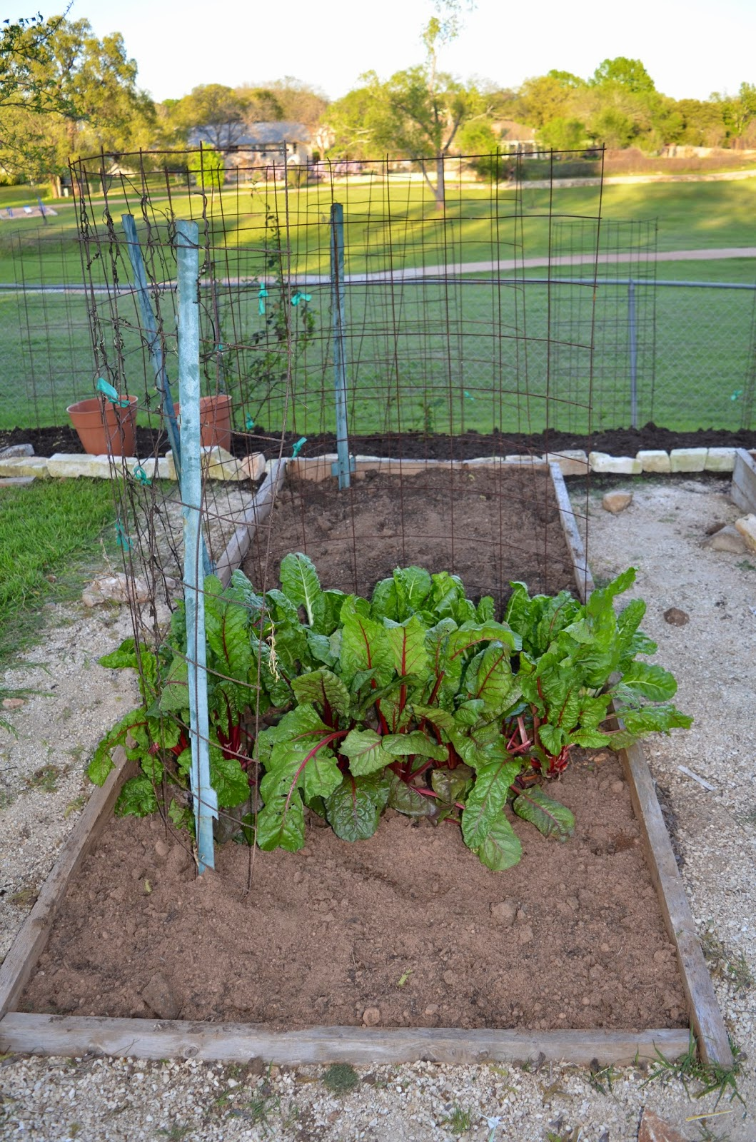 rebecca u0027s texas garden spring 2015 veggie bed planting