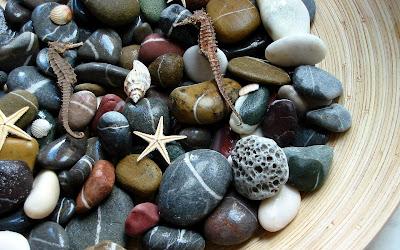 Piedras y estrellas de mar