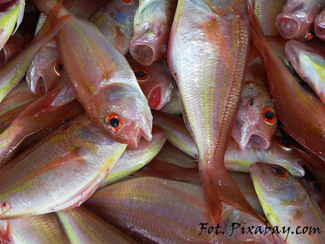 tajemnice-natury.blogspot.com