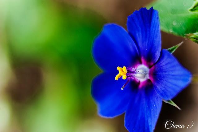 Fotografía de una flor tomada con 3 tubos de extensión.