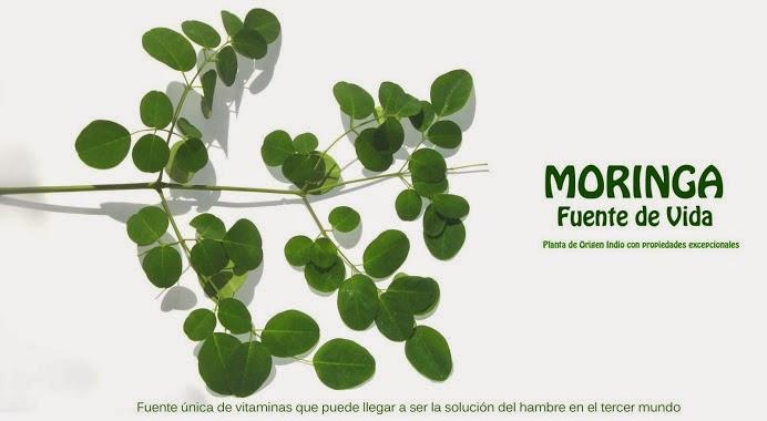 Usos medicinales de la Planta Moringa